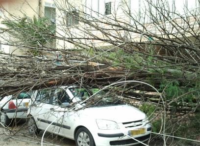 העץ קרס על רכבה של הנהגת, מי חייב לשלם?