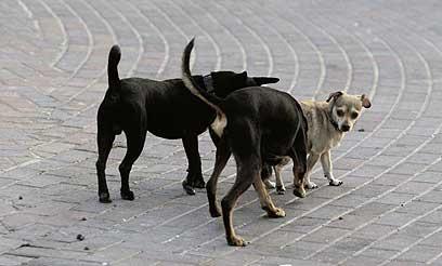 לא רק בבית שמש: שני כלבים נשכו מטייל בחיפה