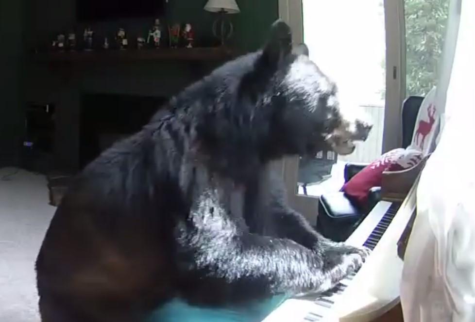 השחור הענק הזה התפרץ לבית והתיישב לנגן על הפסנתר