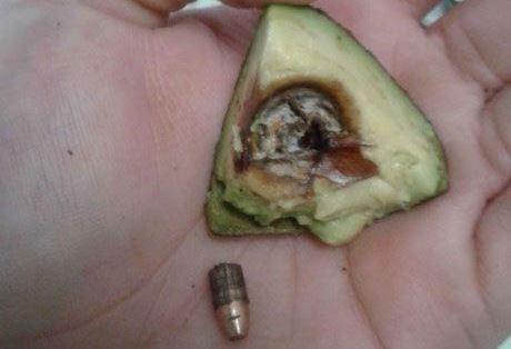 הגלעין הקטלני: אישה מצאה כדור אקדח באבוקדו שרכשה