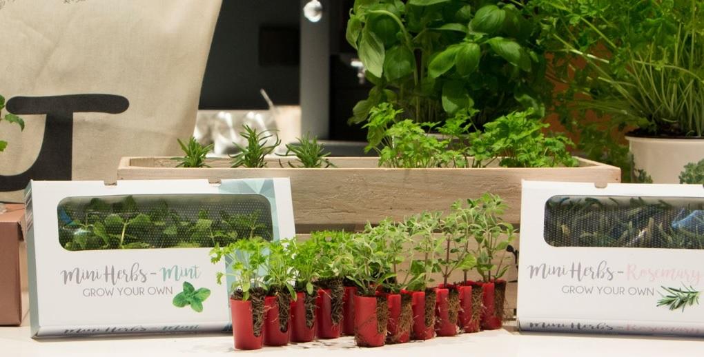 לראשונה: צמחים יימכרו באינטרנט, בשל פיתוח המאפשר משלוח בדואר למשך 10 ימים
