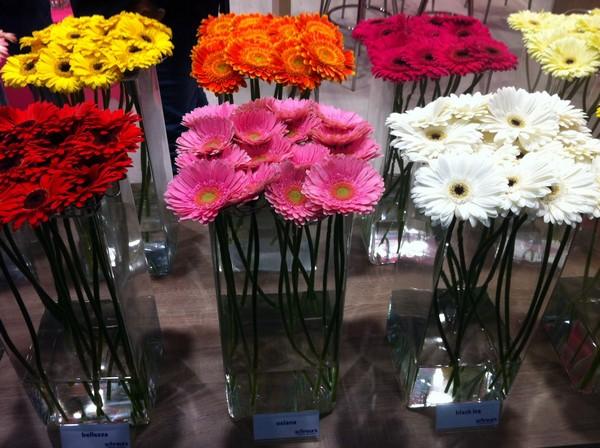 שוק הפרחים של יובל חוזר • מתחם חוצות המפרץ OUTLET לרגל ראש השנה