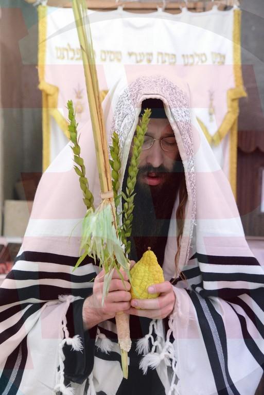 מְגָדִים תַּמְתִּיק וְתוֹשִׁיעַ • סדר הנענועים בחצר הקודש ספינקא גני גד