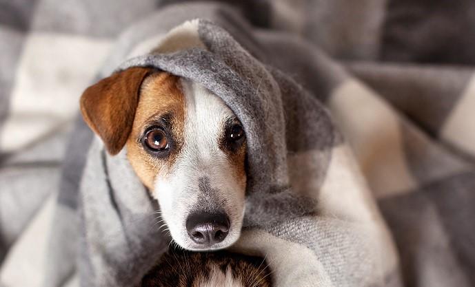 חורף קר? כך נמנע צער בעלי חיים בחורף